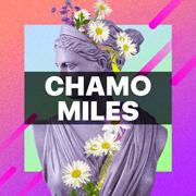 Chamomiles
